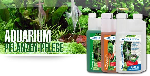 Die perfekte Pflanzenpfelge für Ihr Aquarium - Endlich sattgrüne und prächtige Aquariumpflanzen