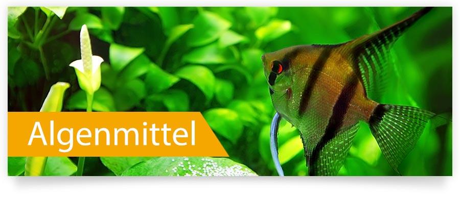 Algenmittel für Ihr Aquarium - Befreit Ihr Aquarium schnell und dauerhaft von Algen.