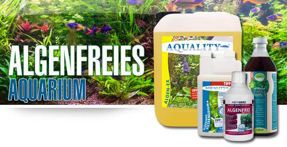 Tipps für ein algenfreies Aquarium