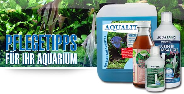 3 Pflegetipps für Ihr Aquarium