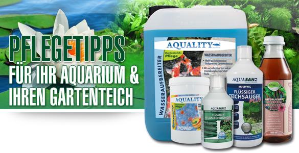 Pflegetipps für Ihr Aquarium und Ihren Gartenteich