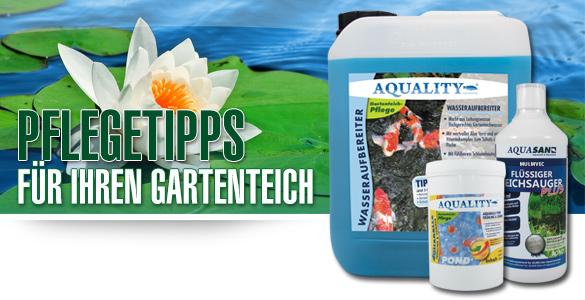 3 Pflegetipps für Ihren Gartenteich