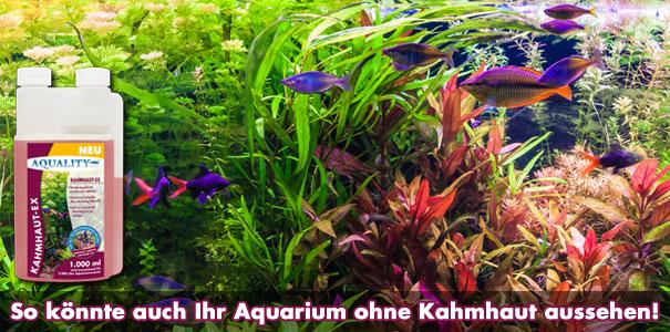AQUALITY Kahmhaut-EX