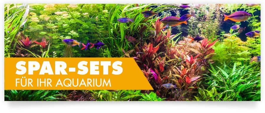 Ideale Spar-Sets für Ihr Aquarium - Hier sparen Sie doppelt!