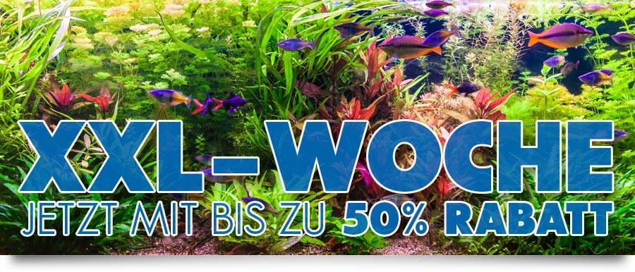 XXL-Aquarium-Angebote